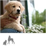 ペットと暮らす家 ロゴ