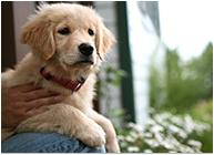 ペットと暮らす家 写真
